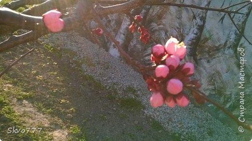 Цветы лимона домашнего фото 3