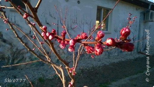 Цветы лимона домашнего фото 4