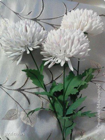 Вот такие хризантемы у меня получились фото 1