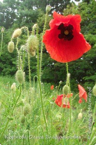 Букет полевых цветов Ставрополья. фото 3