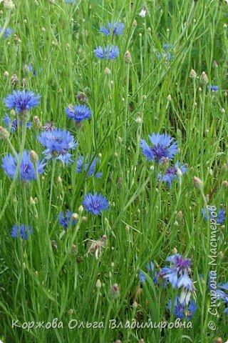 Букет полевых цветов Ставрополья. фото 5