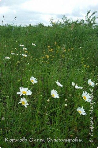 Букет полевых цветов Ставрополья. фото 6