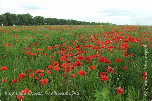 Букет полевых цветов Ставрополья. фото 2