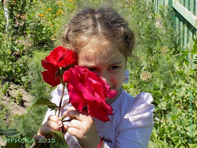 Приветствую всех гостей моей странички!!! Не зря говорят, что роза королева цветов и царица ароматов! У нас на даче море цветов, а особенно мамочка любит розы, кусты роз рассажены по всей даче и они такие разнообразные и безумно красивые. В эти выходные мы были на даче, а там такие чудесные розы, что мне очень захотелось с вами поделиться. Дальше будет много фото. Приятного просмотра!!! фото 4