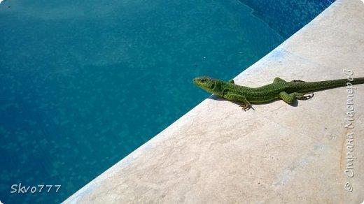 Ласточки тоже любят купаться в бассейне фото 2