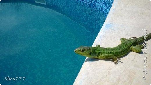 Ласточки тоже любят купаться в бассейне фото 3