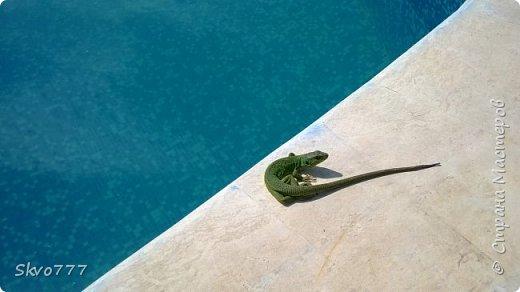 Ласточки тоже любят купаться в бассейне фото 4