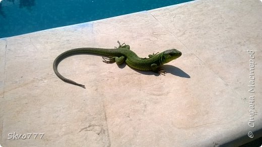 Ласточки тоже любят купаться в бассейне фото 5