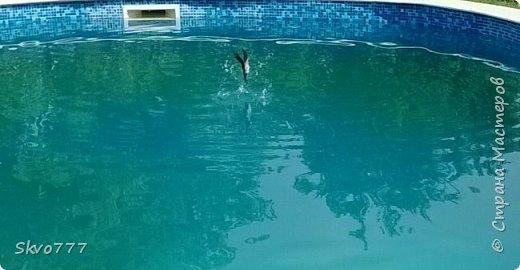 Ласточки тоже любят купаться в бассейне фото 1