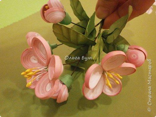 Яблоня цветёт. фото 7