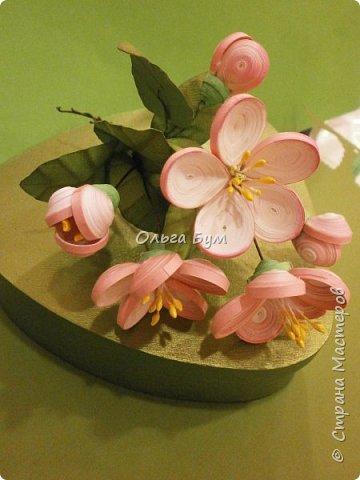 Яблоня цветёт. фото 6