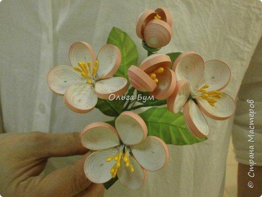 Яблоня цветёт. фото 3