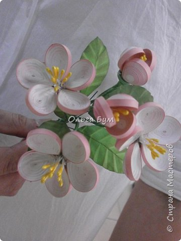Яблоня цветёт. фото 4