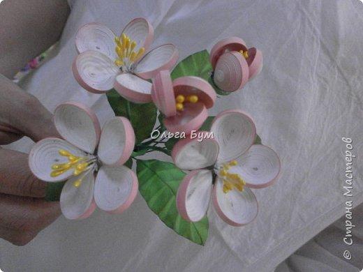 Яблоня цветёт. фото 5