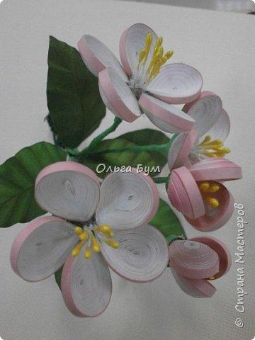 Яблоня цветёт. фото 2