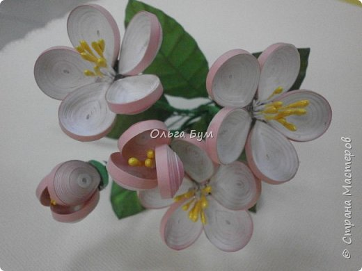 Яблоня цветёт. фото 1
