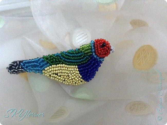 Сестре на День рождения сделала такую бисерную птичку-брошку. Амадина Гульда.  фото 1