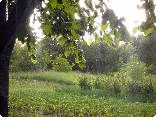 Добрый вечер, страна!  Очень-очень давно меня не было, и как-то даже странно вроде - сейчас сессия, а я как раз нашла время для блога) Но сегодня шел дождь, и после него была радуга... Первый раз... Не могла упустить такую красоту... А потом... Пошло-поехало!!) От фотоаппарата не оторвать было! Так хотелось фотографировать, и неважно что, всё подряд! Вот, принимайте... Всего понемножку) Но всё зеленое =3  фото 13