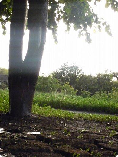 Добрый вечер, страна!  Очень-очень давно меня не было, и как-то даже странно вроде - сейчас сессия, а я как раз нашла время для блога) Но сегодня шел дождь, и после него была радуга... Первый раз... Не могла упустить такую красоту... А потом... Пошло-поехало!!) От фотоаппарата не оторвать было! Так хотелось фотографировать, и неважно что, всё подряд! Вот, принимайте... Всего понемножку) Но всё зеленое =3  фото 14