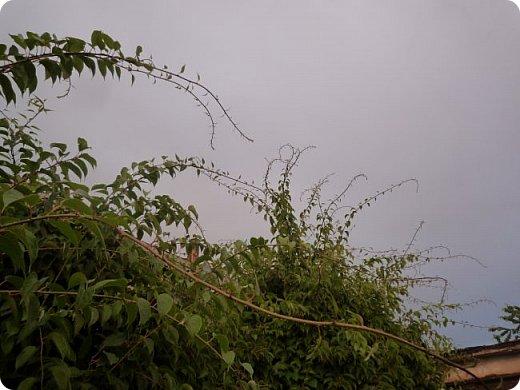 Добрый вечер, страна!  Очень-очень давно меня не было, и как-то даже странно вроде - сейчас сессия, а я как раз нашла время для блога) Но сегодня шел дождь, и после него была радуга... Первый раз... Не могла упустить такую красоту... А потом... Пошло-поехало!!) От фотоаппарата не оторвать было! Так хотелось фотографировать, и неважно что, всё подряд! Вот, принимайте... Всего понемножку) Но всё зеленое =3  фото 8