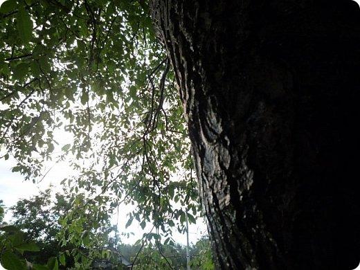 Добрый вечер, страна!  Очень-очень давно меня не было, и как-то даже странно вроде - сейчас сессия, а я как раз нашла время для блога) Но сегодня шел дождь, и после него была радуга... Первый раз... Не могла упустить такую красоту... А потом... Пошло-поехало!!) От фотоаппарата не оторвать было! Так хотелось фотографировать, и неважно что, всё подряд! Вот, принимайте... Всего понемножку) Но всё зеленое =3  фото 24