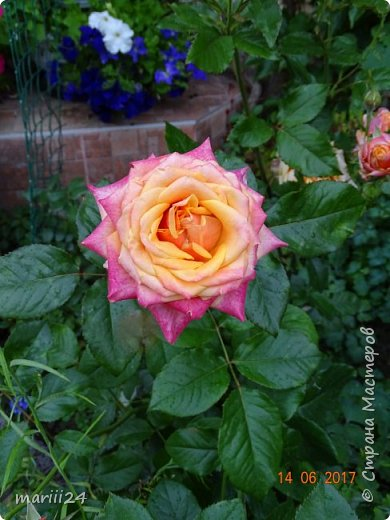 Роза – символ совершенства, Мудрости и чистоты. Признано её главенство, Средь цветочной пестроты. В лепестках хранит царица, Тайну нежности, любви. Каждый может насладиться, Эталоном красоты. Роз букет – очарованье, Дарит символ каждый цвет: Красный – путь к любви, признанье, Белый – чистоты завет.  ВесАн фото 34
