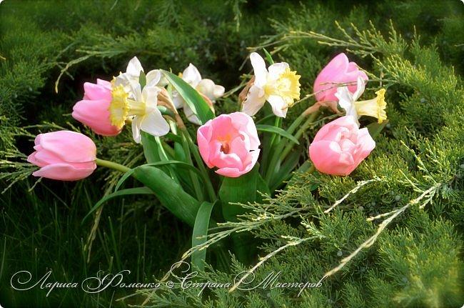 Нежный, весенний букет тюльпанов и нарциссов. фото 5