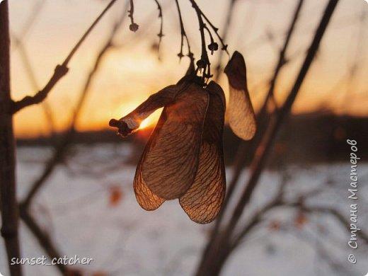 Чтобы оправдать смену ника, хочу вам показать красоту, которой любуюсь в хорошую погоду на закатах.  фото 6