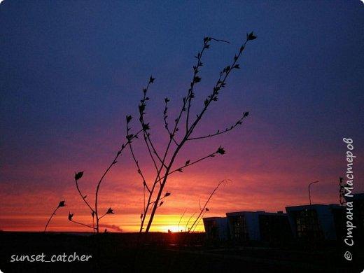 Чтобы оправдать смену ника, хочу вам показать красоту, которой любуюсь в хорошую погоду на закатах.  фото 18