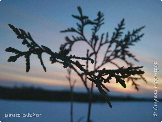 Чтобы оправдать смену ника, хочу вам показать красоту, которой любуюсь в хорошую погоду на закатах.  фото 9