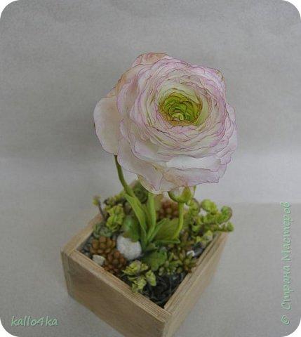 Мой любимый цветочек, приятного просмотра!  фото 1