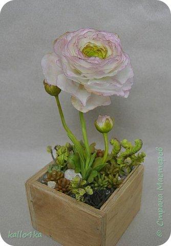 Мой любимый цветочек, приятного просмотра!  фото 2