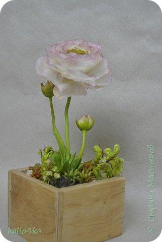 Мой любимый цветочек, приятного просмотра!  фото 3