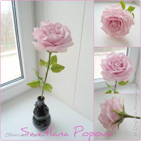 Донна Роза фото 1