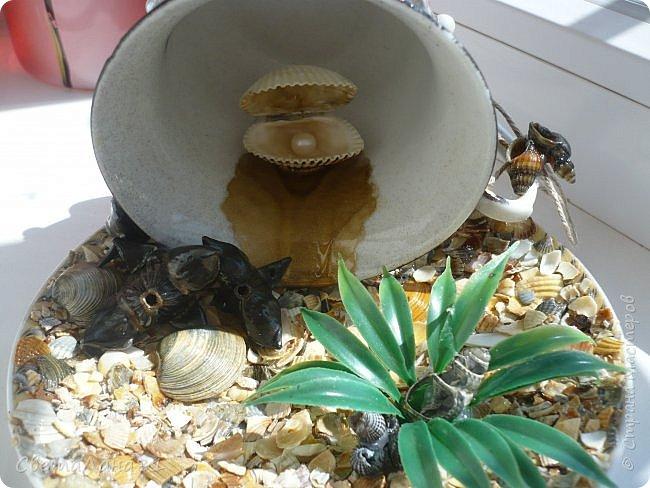 Съездили на Азов, привезли ракушки и еще растение которое после шторма выбрасывает на берег, если не ошибаюсь называется морской черт. фото 5