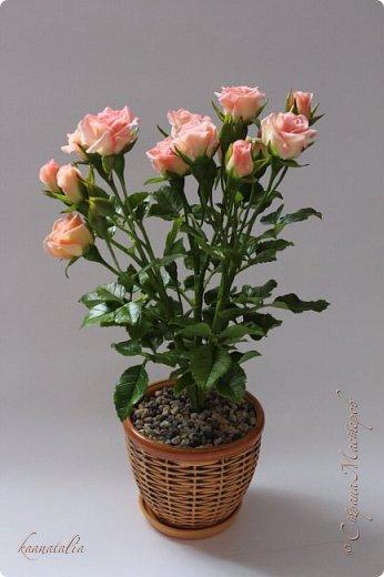 Сначала чуть-чуть готовых роз... фото 2
