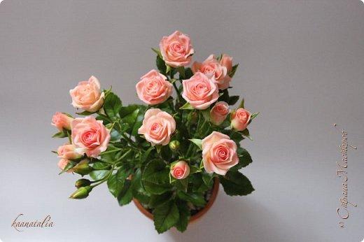 Сначала чуть-чуть готовых роз... фото 3