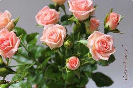 Сначала чуть-чуть готовых роз... фото 4