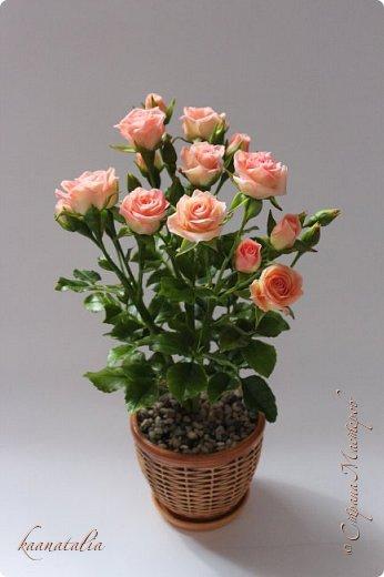 Сначала чуть-чуть готовых роз... фото 34
