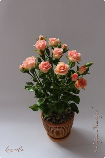 Сначала чуть-чуть готовых роз... фото 5