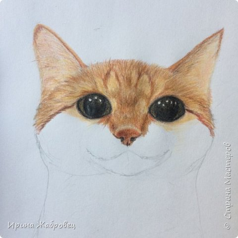 Моё домашнее животное. Рисунок с фотографии.Долго не могли поймать момент, посадили на стол. фото 3