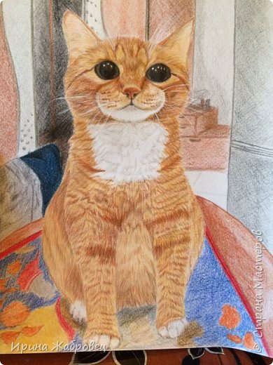 Моё домашнее животное. Рисунок с фотографии.Долго не могли поймать момент, посадили на стол. фото 1