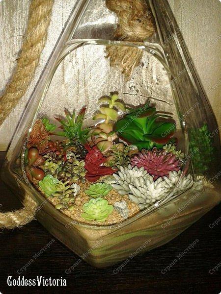 Флорариум для веранды и т.п. фото 5