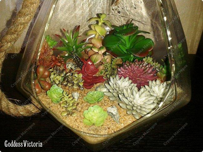 Флорариум для веранды и т.п. фото 6
