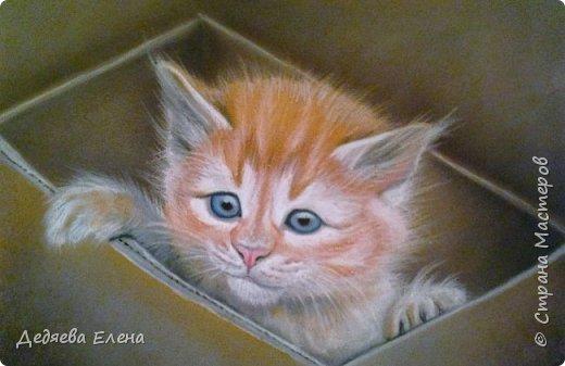 Продолжаю работать над портретами животных, мне очень нравится!   Милый пастельный пушистик фото 4