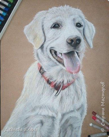 Продолжаю работать над портретами животных, мне очень нравится!   Милый пастельный пушистик фото 2