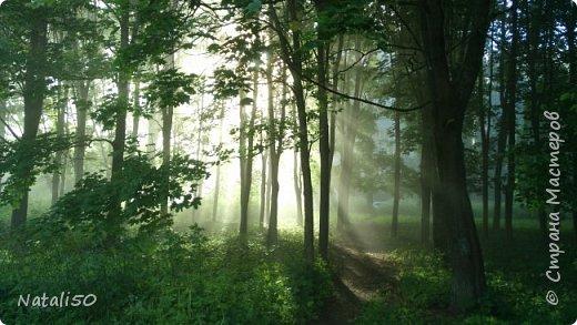 Доброго всем дня!! Приглашаю на прогулку по нашему Подмосковью. Редкие дни солнечные,всё дожди..дожди.. фото 3