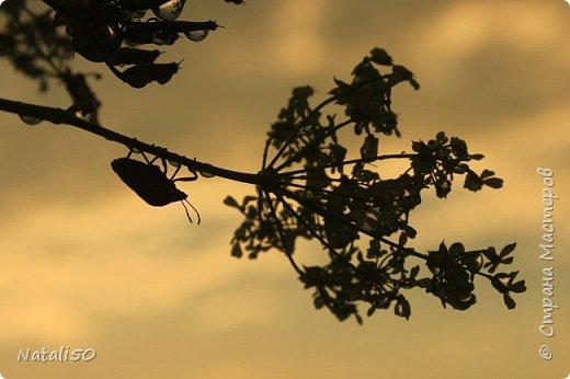 Доброго всем дня!! Приглашаю на прогулку по нашему Подмосковью. Редкие дни солнечные,всё дожди..дожди.. фото 9
