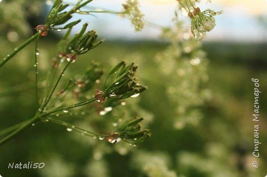 Доброго всем дня!! Приглашаю на прогулку по нашему Подмосковью. Редкие дни солнечные,всё дожди..дожди.. фото 11