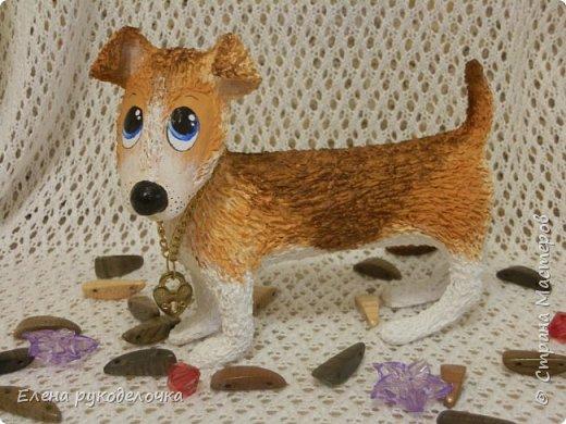 Появился у меня на свет ещё один собак неизвестной породы. Откликается на имя ЛАКИ. Очень милый и озорной парнишка.  Прошу любить и жаловать! фото 2